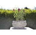 Řebčík kostkovaný FloraSelf Fritillaria meleagris Ø 9 cm květináč
