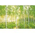 Fototapeta Sunday, motiv les, přírodní 368 x 254 cm