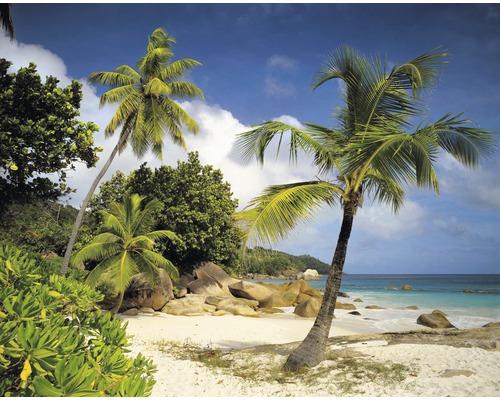 Fototapeta Komar, motiv pláž, zeleno-modrá