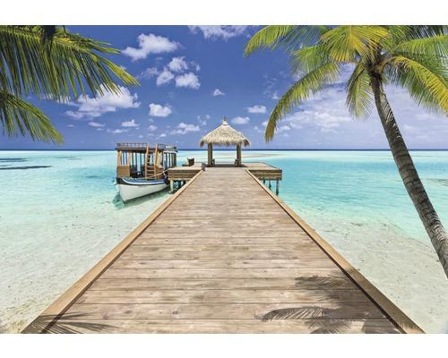 Fototapeta Komar, motiv pláž, modro-zelená