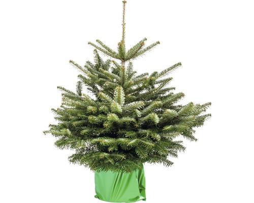 Vánoční strom v kontejneru Abies Nordmanniana 80/100