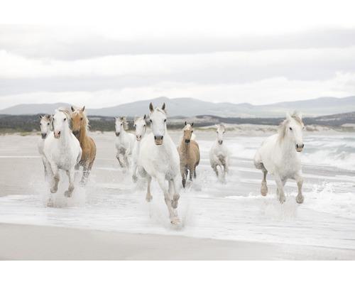 Fototapeta Komar, motiv zvířata, béžovo-bílá